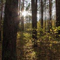 лес :: Сергей Говорков