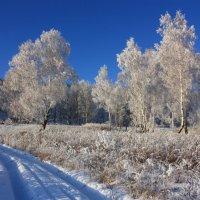 По снежной дороге. :: Наталья Юрова