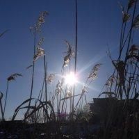Солнце в объективе :: Людмила Вихтинская