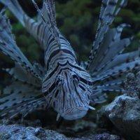 рыба :: светлана сафина
