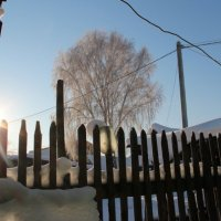 зимние морозы :: светлана сафина