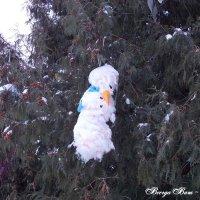 Фото ульяновска елка :: Евгенич Ес