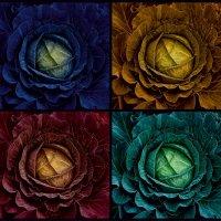 про цветную капусту :: Александр Сергеев
