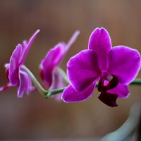 Леди цветок :: Марина Жилина