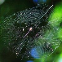 Паук в паутине :: Катерина Муравлева