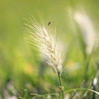 Макро взгляд на комара :: Катерина Муравлева