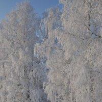 зима :: Михаил Карпов