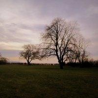 Lonely trees :: Полина Калинкина