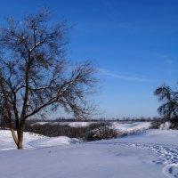Зимних дней волшебство. :: Жанна Савкина