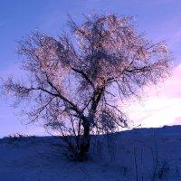 Одиночество. :: Жанна Савкина