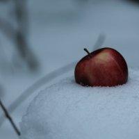 Ледяное сердце :: Елена Жерносекова