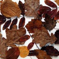 Осенние листья :: Владимир Немцев
