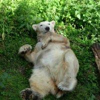 Белый медведь на травке! :: Марина Витушкина