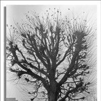 Дерево :: Яков Реймер