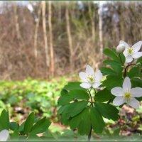 Весна в Ботаническом саду :: Василиса Никитина