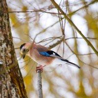 Птичка :: Александр Кочергин