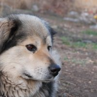 Моя любимая собака :: Мариам Тонеян