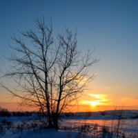 морозный вечер :: Анна Бурылова