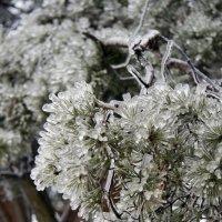 Иголки в ледяной дождь :: Ekaterina Shchurina