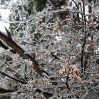 Ледяной дождь :: Ekaterina Shchurina