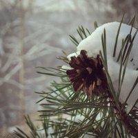 Зимний лес, сосновая шишка. :: Алёна Бодрова