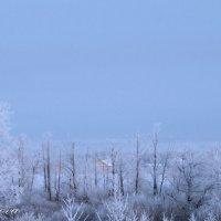 зима :: Alina Basharova