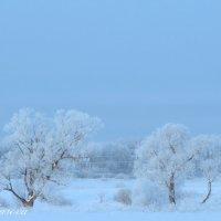 русская зима :: Alina Basharova