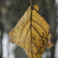 Осенний лист... :: Дмитрий Скубаков