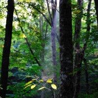 """Фото на тему ,, Луч света в темном царстве"""". :: сергей шурыгин"""