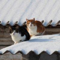 Солнечные ванны :: Олег Ивасенко