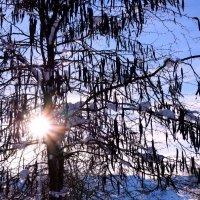 Зимнее солнце. :: Жанна Савкина