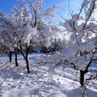 Сказка зимняя рядом! :: Жанна Савкина