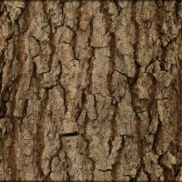 кора дерева-сосна :: Коля Вуткевич