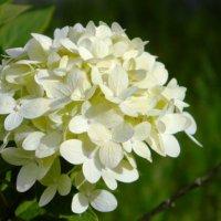 Цветы :: Олег Ровда
