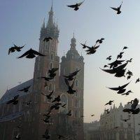 Краков :: Jenny Kiev