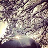 Мороз и солнце :: Jenny Kiev