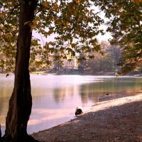 Осень в Теберде. :: Жанна Савкина