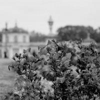 Осенняя песня последних цветов :: Ульяна Жукова
