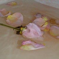 Опавшая роза.... :: Светлана Щипкова
