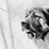 Собачка :: Солнечная Лисичка =Дашка Скугарева