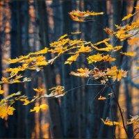 Листья жёлтые... :: Александр Константинов