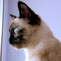 Котёнок :: Алёна Шкобенева