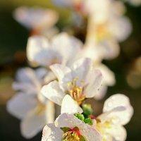 Капельки-цветочки :: Иван Иванов