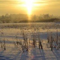 Снежная дорожка :: Павел Данилевский