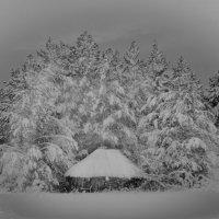 Домик в лесу :: Зуфар Халиков