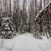 По дороге к Деду Морозу... :: Виталий Ахмедьянов
