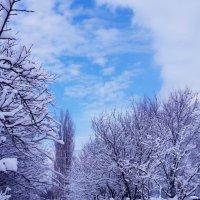 Отблеск неба голубого. :: Жанна Савкина