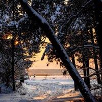 Зимний лес :: Andrey Spizhavka