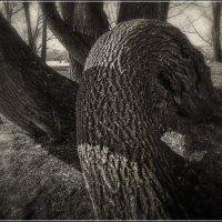Про дерево :: Александр Семенов