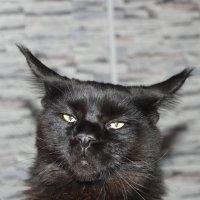 черный кот :: Valeriy Zhukovskiy